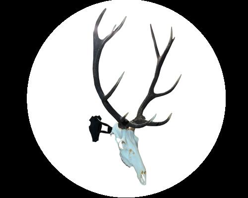 Cranium-Design-Murus_white