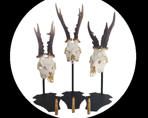 Cranium-Design-Parvus 15-20-25 white